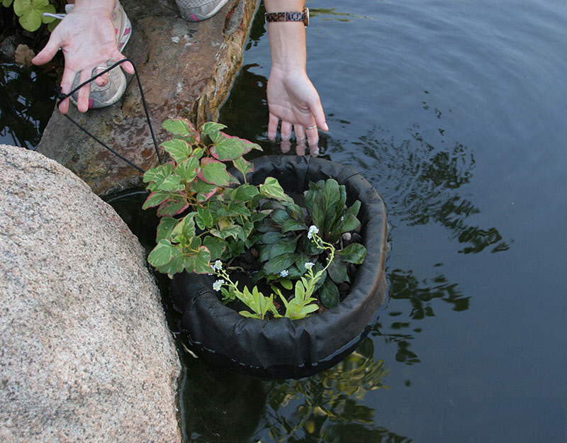 Floating plant island from aquascape for Floating plant pots