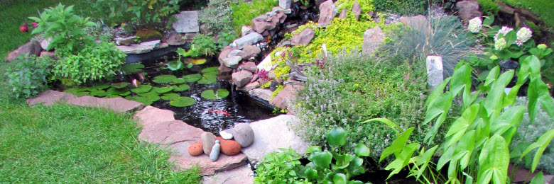 Create your oasis with aquatic planting supplies in Canada.