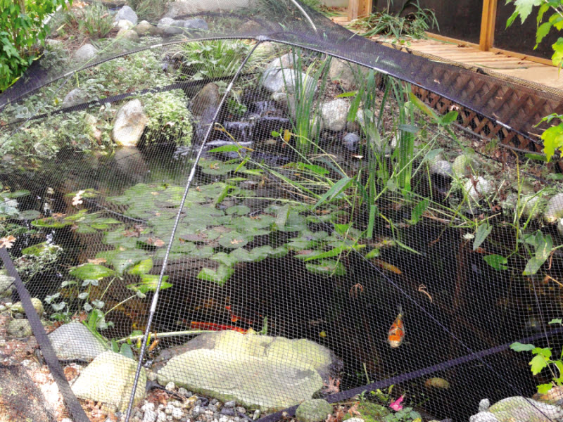 Dome style pond garden ultra nets by atlantic for Garden pool netting